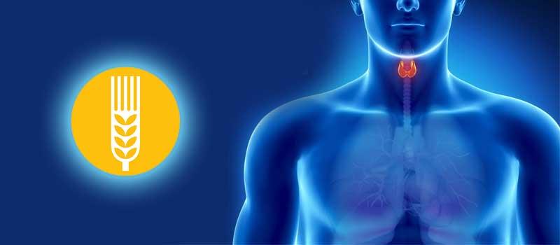 Legatura dintre tiroidita autoimuna si boala celiaca