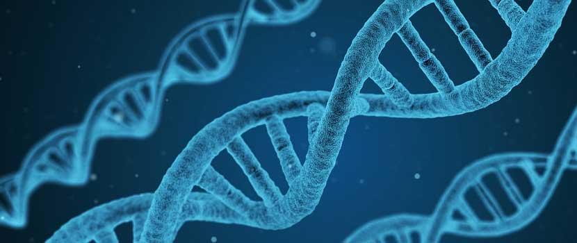 Predispozitia genetica pentru boala celiaca