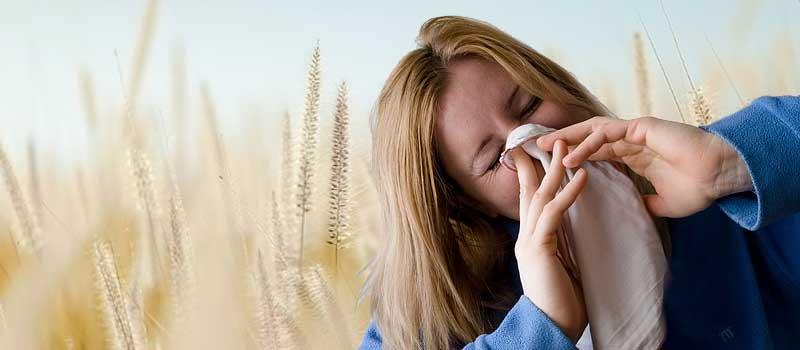 alergia la grau