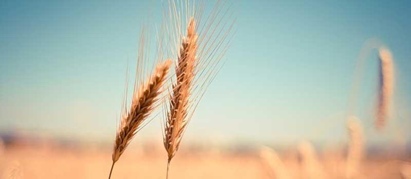 diferenta dintre intoleranta si alergia alimentara