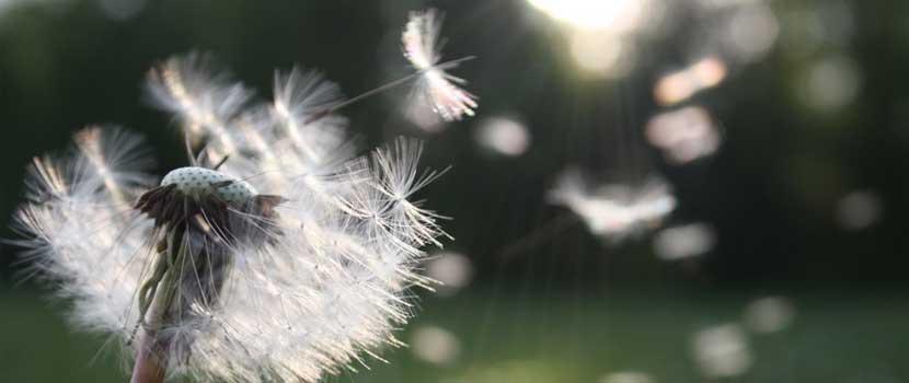 Alergii---tot-ce-trebuie-sa-stii-despre-ele--Simptome-Tratament--Diagnostic