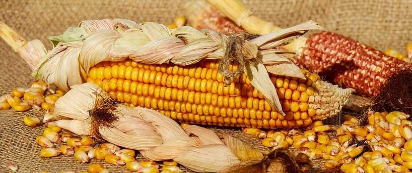 porumbul Cereale integrale